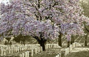 graves-300x193
